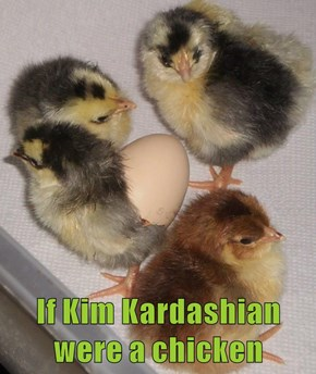 If Kim Kardashian were a chicken