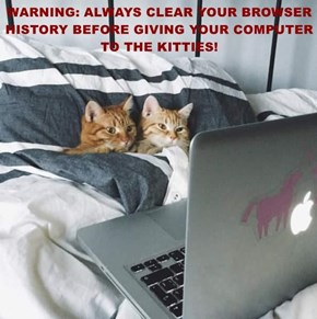 WARNING: ALWAYS CLEAR YOUR BROWSER HISTORY BEFORE GIVING YOUR COMPUTER TO THE KITTIES!