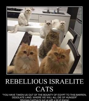 REBELLIOUS ISRAELITE CATS