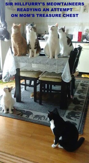 SIR HILLFURRY'S MEOWTAINEERS                                                    READYING AN ATTEMPT                                ON MOM'S TREASURE CHEST