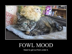 FOWL MOOD