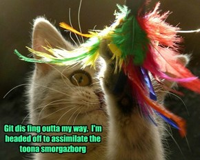 Git dis fing outta my way.  I'm headed off to assimilate the toona smorgazborg
