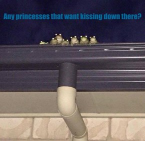 Any princesses that want kissing down there?