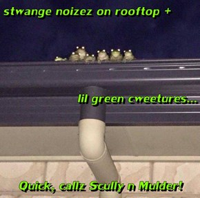 stwange noizez on rooftop +  lil green cweetures... Quick, callz Scully n Mulder!