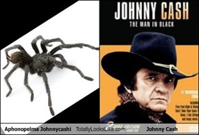 Aphonopelma Johnnycashi Totally Looks Like Johnny Cash
