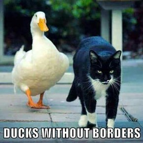 DUCKS WITHOUT BORDERS