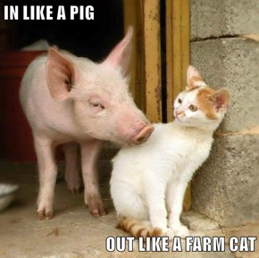 IN LIKE A PIG  OUT LIKE A FARM CAT