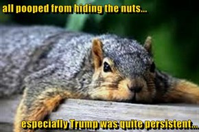 all pooped from hiding the nuts...  especially Trump was quite persistent...