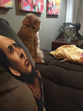George Isn't So Sure About Nicolas Cage or His Human's Taste in Home Decor