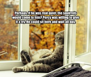 Perhaps, if he was real quiet, the squirrels would come to him? Percy was willing to give it a try. He could sit here and wait all day.