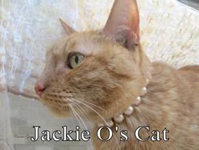 Jackie O's Cat