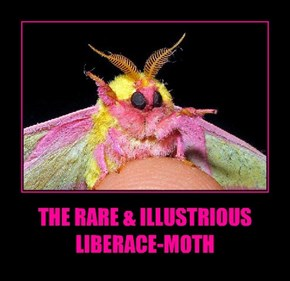 THE RARE & ILLUSTRIOUS  LIBERACE-MOTH