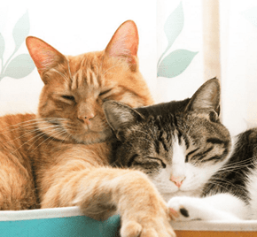 National Napping Day is The Perfect Excuse to Take a Cat Nap