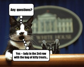 Any  questions? Yes -- lady in the 3rd row with the bag of kitty treats...