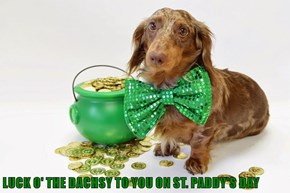 LUCK O' THE DACHSY TO YOU ON ST. PADDY'S DAY