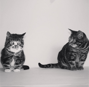 Elfie and Gimli are the Cutest Little Cat Siblings