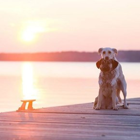 This Looks Like an Engagement Photo but Better, Because Dogs