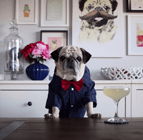 Rocco the Pugtender Wants to Make You a Drink