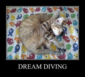 DREAM DIVING