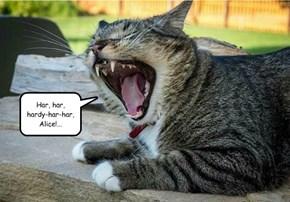 Kramden Kat