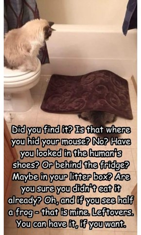 Did you find it? Is that where you hid your mouse? No? Have you looked in the human's shoes? Or behind the fridge? Maybe in your litter box? Are you sure you didn't eat it already? Oh, and if you see half a frog - that is mine. Leftovers. You can have it,