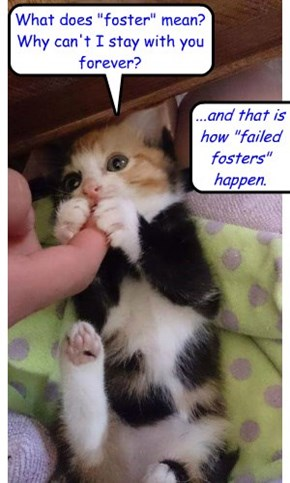 "...and that is how ""failed fosters"" happen"