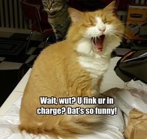 Sarcastic kitteh iz amuzed.