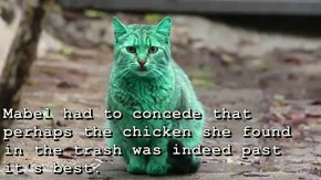 Mabel had to concede that perhaps the chicken she found in the trash was indeed past it's best.