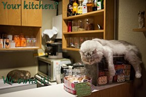 Your kitchen?  We owns it!