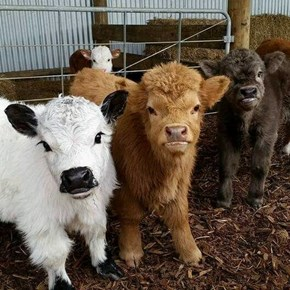 Look at These Ridiculously Photogenic Cows