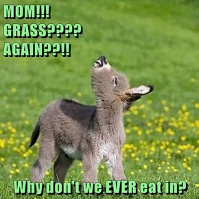 MOM!!!                         GRASS????                            AGAIN??!!  Why don't we EVER eat in?