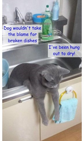 Dog wouldn't take the blame for broken dishes