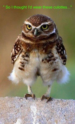 Fashion Owl
