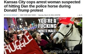 Liberal attacks horse