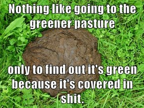 Nothing like going to the greener pasture   only to find out it's green because it's covered in shit.
