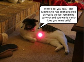 The other Cats laughed when Tiddles claimed the Red Dot actually came to him!