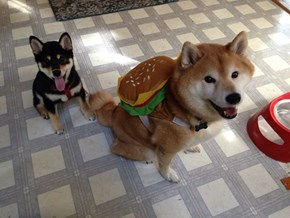 Dogeburger Should Probably Be Our New Mascot