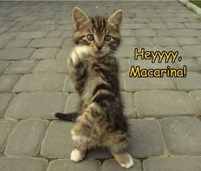 Heyyyy, Macarina!