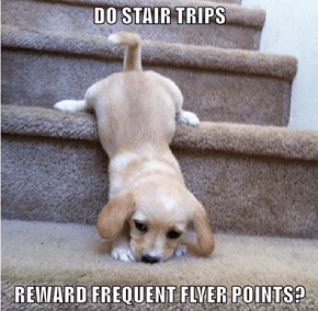 DO STAIR TRIPS  REWARD FREQUENT FLYER POINTS?