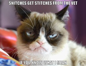 SNITCHES GET STITCHES FROM THE VET  IF YOU KNOW WHAT I MEAN