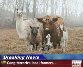 Breaking News - Gang terrorize local farmers...