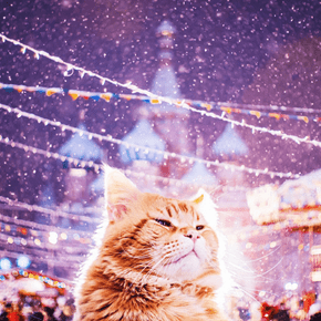 Meet the Russian Cat That Gets to Live in a World Full of Magic