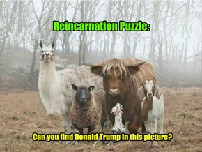 Reincarnation Puzzle: