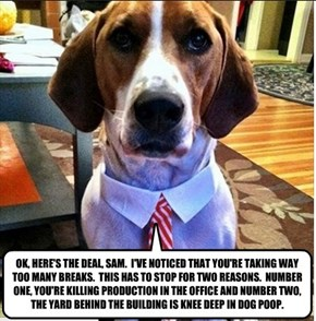 OK, HERE'S THE DEAL, SAM.  I'VE NOTICED THAT YOU'RE TAKING WAY TOO MANY BREAKS.  THIS HAS TO STOP FOR TWO REASONS.  NUMBER ONE, YOU'RE KILLING PRODUCTION IN THE OFFICE AND NUMBER TWO, THE YARD BEHIND THE BUILDING IS KNEE DEEP IN DOG POOP.