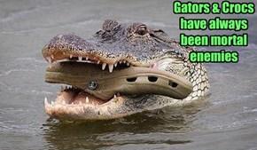 Tonight on Animal Planet: Big Reptile Wwars