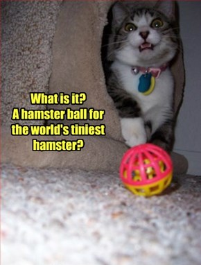 What is it?  A hamster ball for the world's tiniest hamster?