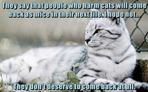 They say that people who harm cats will come back as mice in their next life. I hope not...  They don't deserve to come back at all.