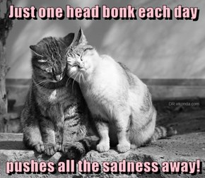 Just one head bonk each day   pushes all the sadness away!