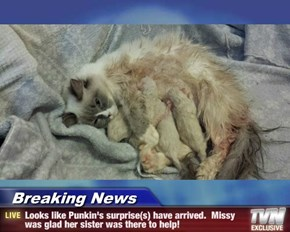 Breaking News - Looks like Punkin's surprise(s) have arrived.  Missy was glad her sister was there to help!