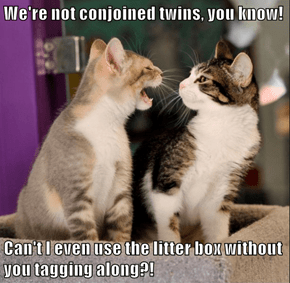 We're not conjoined twins, you know!  Can't I even use the litter box without you tagging along?!